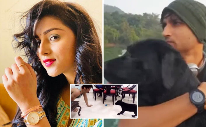 Sushant's niece posts throwback video of late actor with his pet dog