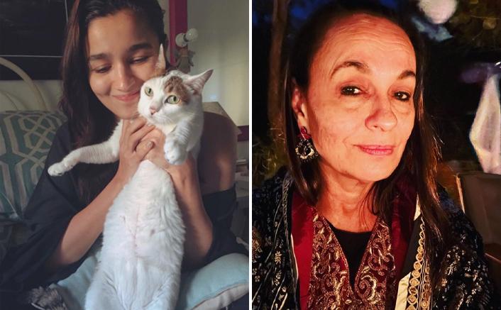 Alia Bhatt mourns the loss of pet cat Sheeba