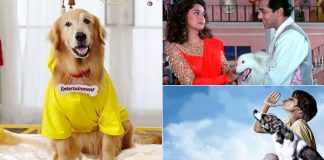 Top 5 Doggos From Pluto Mehra In Dil Dhadakne Do To Bhidu In Chillar Party Who Were No Less Than Heroes
