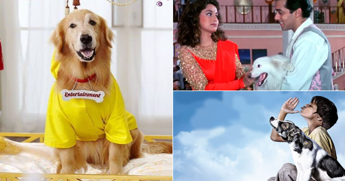 Top 5 Doggos From Tuffy In Hum Aapke Hain Koun To Bhidu In Chillar Party Who Were No Less Than Heroes
