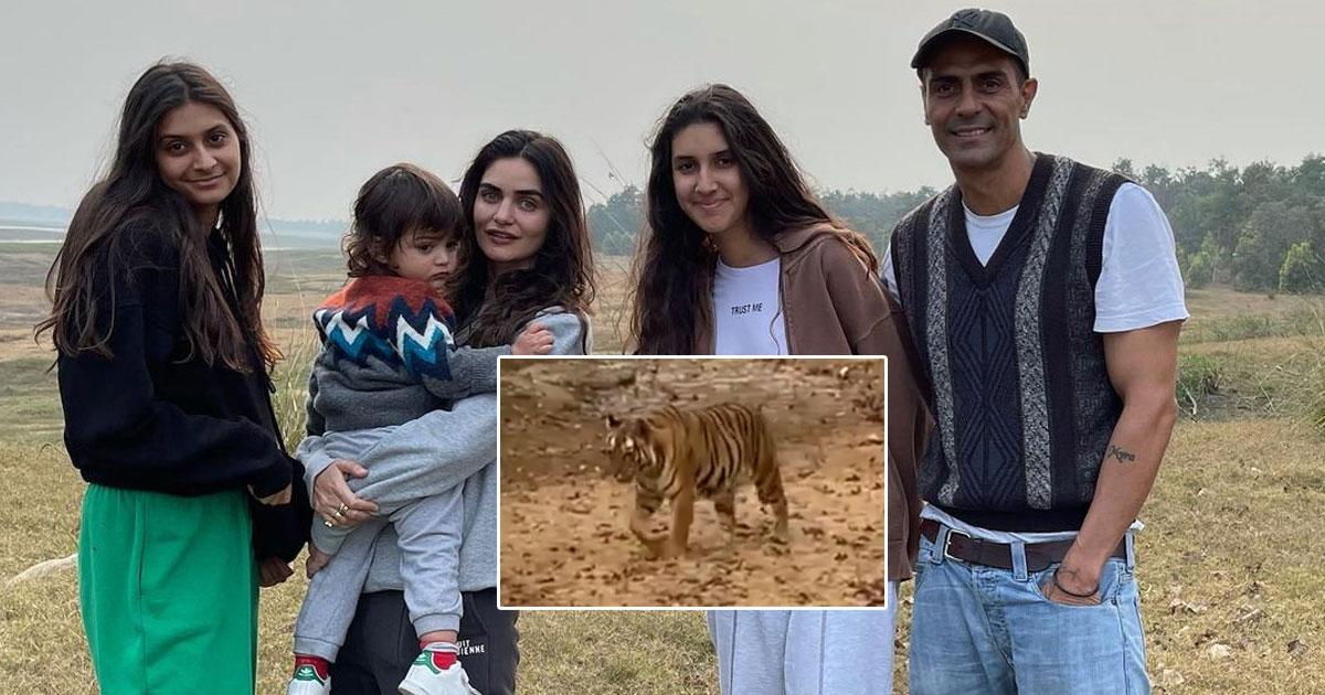 Arjun Rampal Spends 'Mesmerising' Time With Family Amid Satpura Tigers
