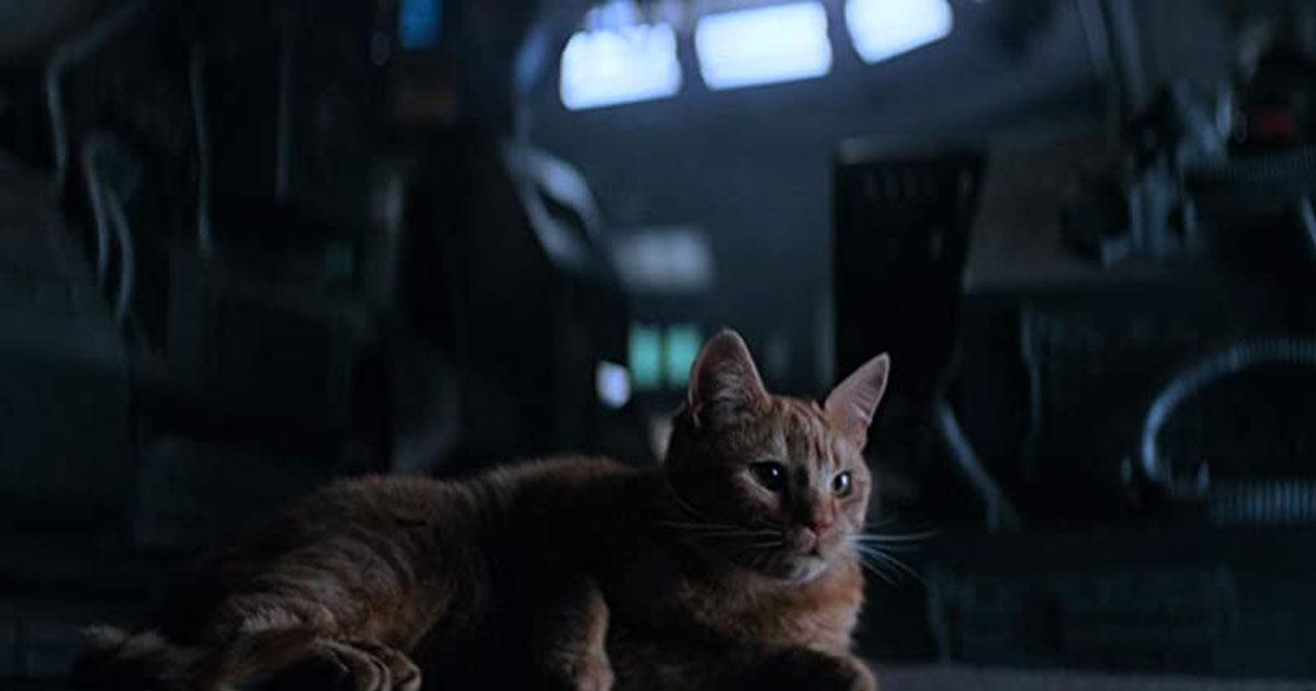 A Still Of Jones From Alien