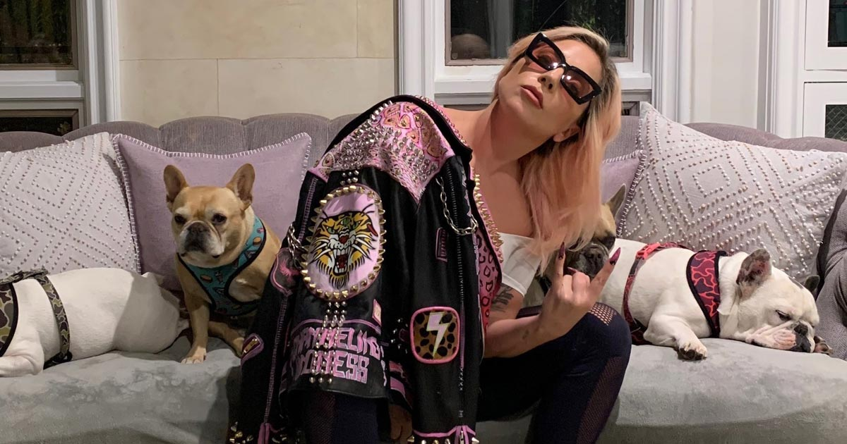 AUTHORITIES INVESTIGATING POSSIBLE GANG CONNECTION IN SHOOTING OF LADY GAGA'S DOG WALKER - REPORT