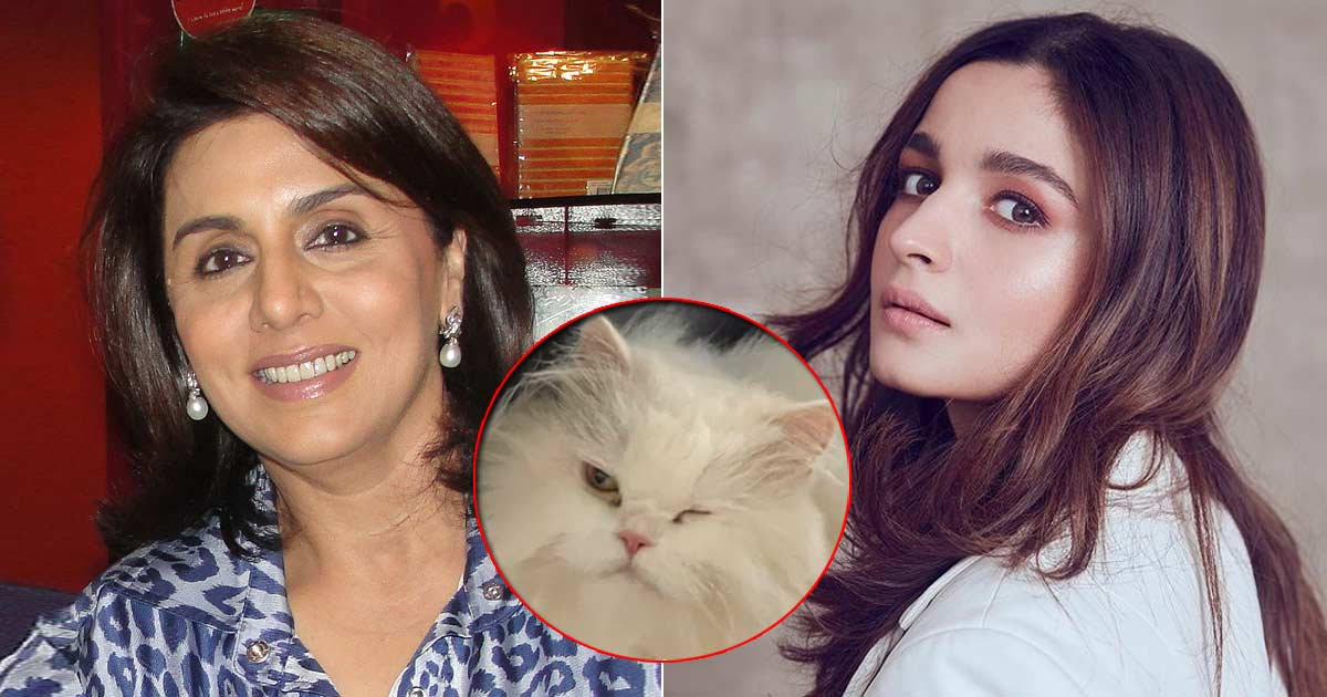 Neetu Kapoor Is The New Cat-Mom As She's Taking Care Of Alia Bhatt's Persian Paw-Friend Edward, Read On