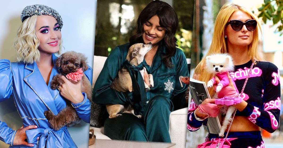This National Pet Day, Check Out How Stylish Priyanka Chopra Jonas, Katy Perry & Paris Hilton's Pets Are