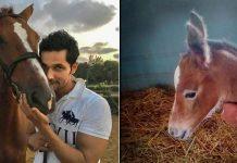 It's a baby girl 'Hope' for Randeep Hooda's horse 'Dream Girl'!