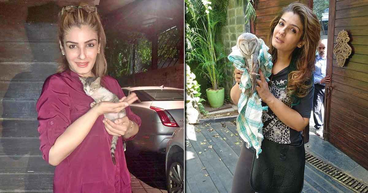 Raveena Tandon Posts Pics Of Rescued Animals: 'My House Has Become Like Dr Dolittle's Home'