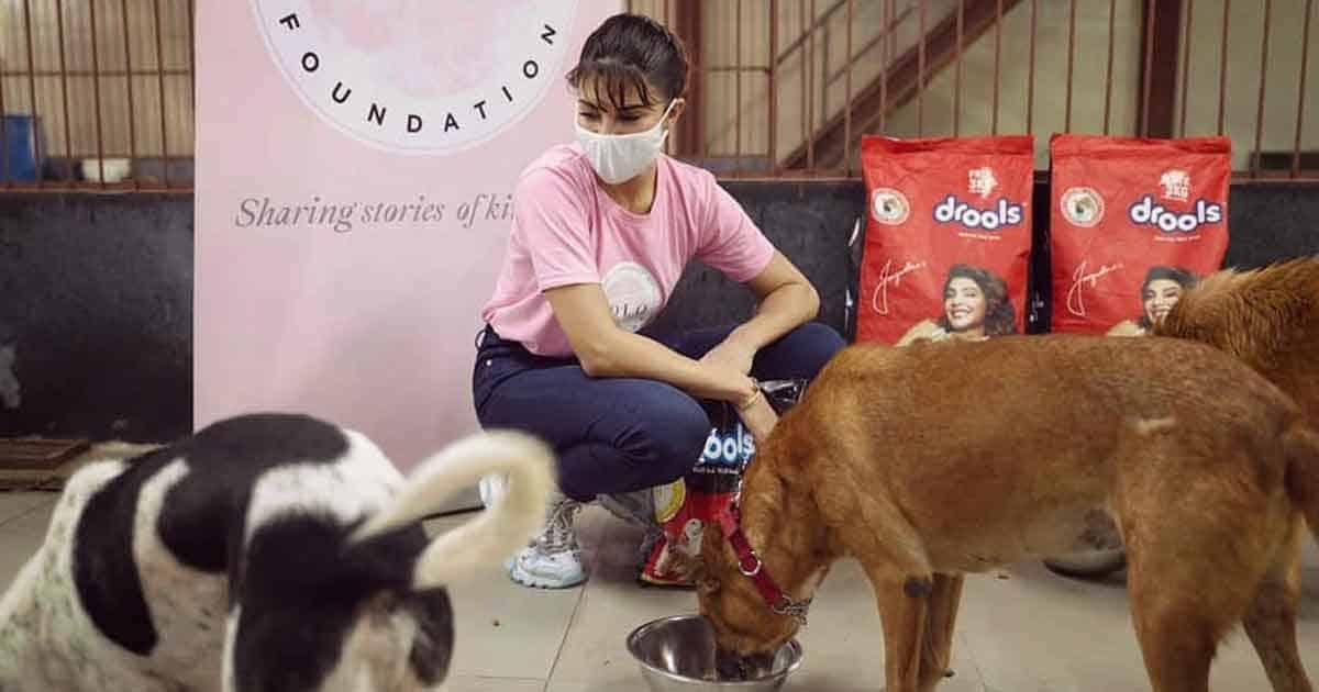 Jacqueline Fernandez Gives 'Angora' The Cold Shoulder In PETA India Campaign